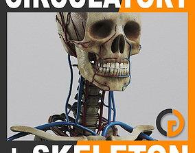 3D model Human Circulatory System and Skeleton - Anatomy