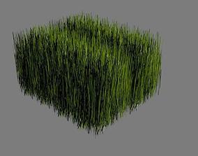 3D model Grasses