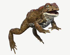 Boreal Toad 3D asset game-ready