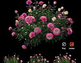 Plant rose set 04 3D model