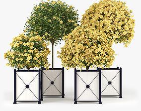 Hibiscus Yellow 3D model