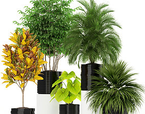 Plants collection 183 3D