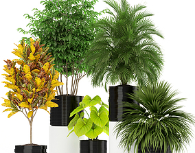 Plants collection 183 3D