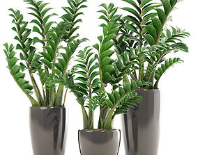 Zamioculcas set plants 3D model