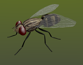 Fly in Blender and Blender Cycles 3D model