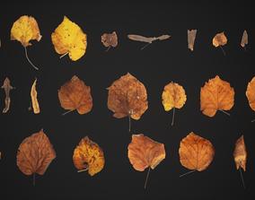 Tilia Dead Leaves 4K Scanned 3D asset