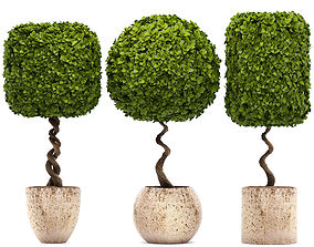 Ornamental tree 3D model