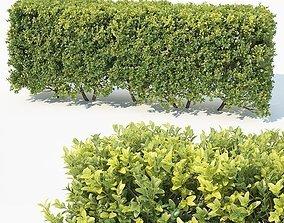 3D bush Buxus Sempervirens Nr6 modular hedge H80cm