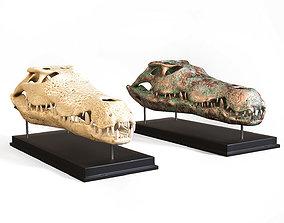 Crocodile skull 3D asset