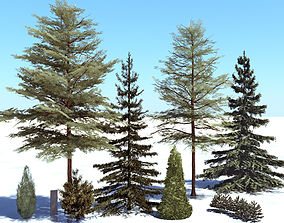 3D Conifer trees