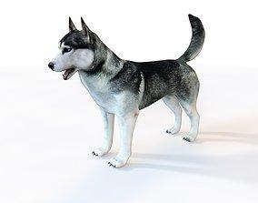 Husky Dog Rigged 3D model