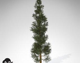 XfrogPlants Incense Cedar 3D model