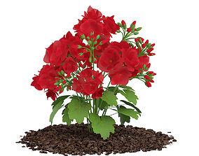 Red Geraniums Geranium caespitosum 3D model