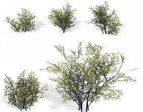 Bush Low poly 3D model