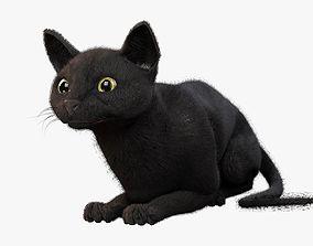 Cat black Rigged 3D asset