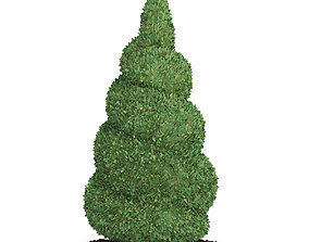 3D Boxwood Plant Buxus sempervirens