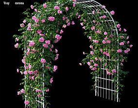Rose plant set 43 3D model