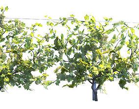Wine Plant Vineyard Grapes fruits 3d model