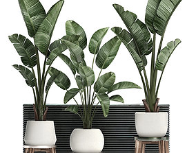 3D Decorative plants in flower pots for the interior 461