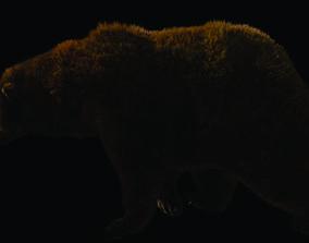 Bear 3d rigged