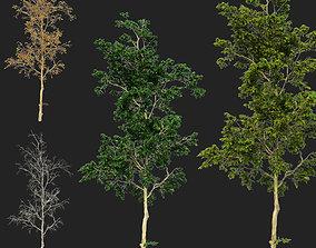 Trees-01 3D