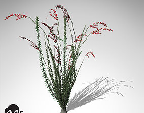 XfrogPlants Ocotillo 3D