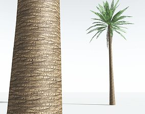 EVERYPlant Date Palm LowPoly 04 --10 Models-- 3D asset