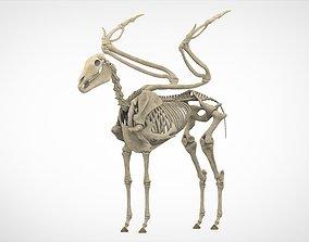 3D model Pegasus Skeleton