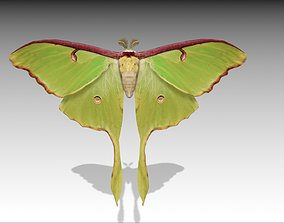 Luna Moth 3D asset