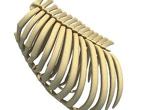 Gorilla Animal Rib Cage 3D model