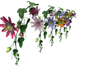 Flower paraguay 3D model