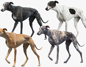 3D Greyhound Animated Collection