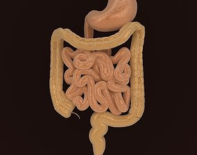 3D Human Digestive Organs