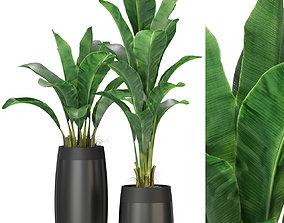 Plants collection 309 3D