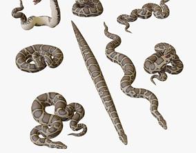 game-ready Burmese Python - 3D Mesh