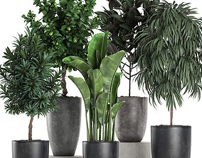 Ornamental plants for the interior in black pots 640 3D
