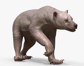 Bear Skin Rigged 3D model