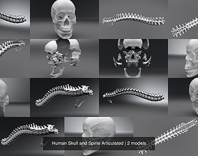 3D model Human Skull and Spine Articulated