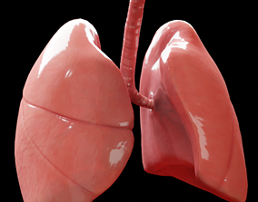Human Lungs 3D asset realtime