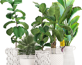 Collection of ornamental plants Exotic 3D