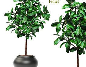 Ficus in pot 3D model