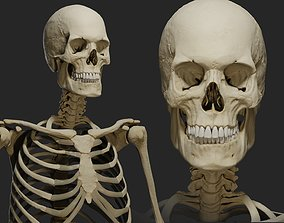 Human male skeleton PBR 3D model