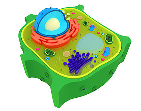 Plant Cell cytoplasm 3D model