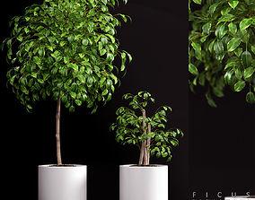 Plant 70 3D model