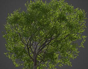 3D model 2021 PBR Indian Sandalwood Collection - 1