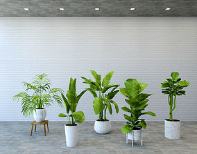 VR / AR / Low-poly Plant 3D Models | CGTrader