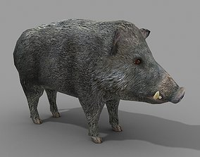 Wild Boar 3D asset realtime