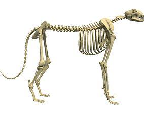 Cheetah Skeleton 3D model