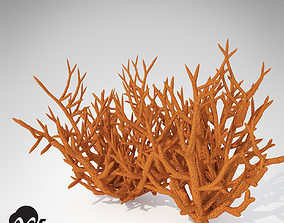 XfrogPlants Birds Nest Coral 3D