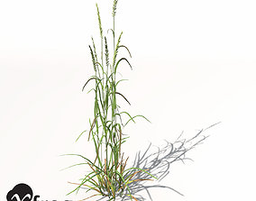 3D model XfrogPlants Ryegrass